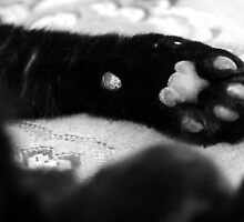 Paws For A Rest by SquarePeg