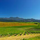 New Zealand Vineyard by 104paul