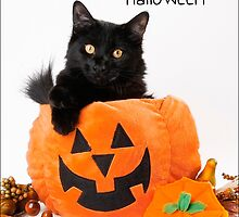 Have a Meowy Halloween by Whitney Mason