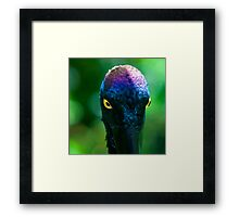 Jabiru Framed Print