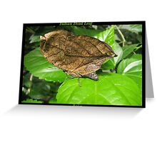 Butterfly (Asia) ~ Indian Dean Leaf Greeting Card