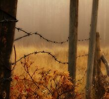 A Foggy Fall Morning by Jennifer Brewer