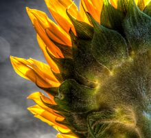The Other Side Of Sunflowers by Bob Larson