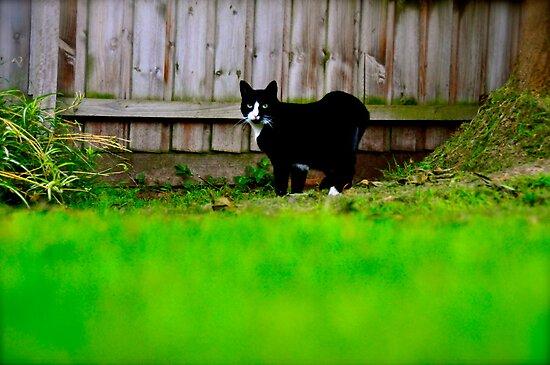 Kat Vs Cat by tiger5