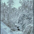 Into White, New Snow on Halls Brook, Groton, NH by Wayne King