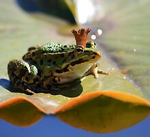 Quite recently at the frog pond... by Andrea Meyer