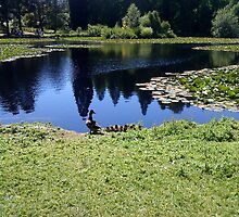 duck family - bedgebury national pinetum and forest by katiebm
