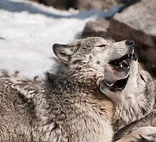 More Than a Mouthful by Tracey  Dryka