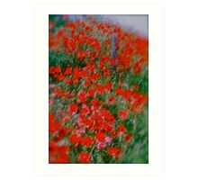 Poppy flowers  - wonderful spring et Austria (Niederösterreich) . . by Brown Sugar . Views (142). Dziękuję ! OK! VSOP !!! Fav (2) ! Art Print