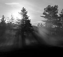 Sunrise bursting through trees and mist at Palsko Lake by Ian Middleton