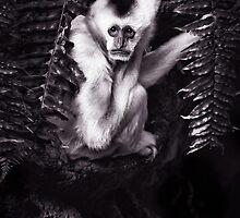 Gibbon in need of Prozac by alan shapiro
