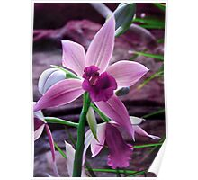 Orchid Collection - 8 Poster