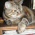Cat on a Bookshelf by Donna Grayson