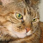 Pretty Cat with yellow eyes by Donna Grayson