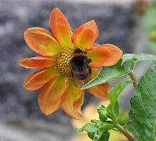 Bumble Bee - Christchurch, NZ by BreeDanielle