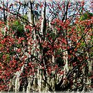 Colours In Trees by Roger Sampson