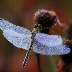 Chrystal dragonfly by Julia Shepeleva