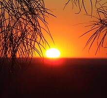 Rural Australia by Liza Barlow