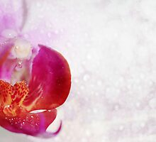 Bubble Orchid by Francesco Malpensi