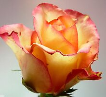 A rose by any other name by ByDebi