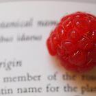 Rubus idaeus by Tom McDonnell