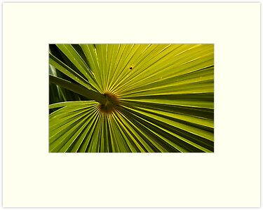 Palm Frond by Barry Doherty