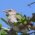 Baby mockingbird in early spring! by jozi1