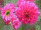 Pink On Glass by Margaret Stevens