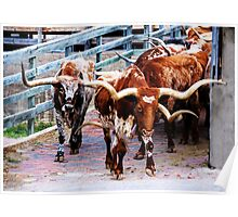 Cattle Drive Thru The Streets Of The Fort Worth Stockyards 2 Poster