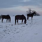 Horses in the snow  by puddingpiesjb