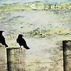 Three Little Birds by bcboscia410