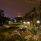 Park Lights by ea-photos