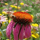 Big Fat Bumblebee by amgmcpherson