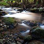 Taggerty River by Vicki Moritz