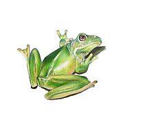 Frog Study Photographic Print