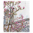 St. Leonard's Magnolias I by Janice Petitjean