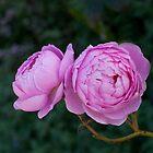 Rose garden by Brian Stark