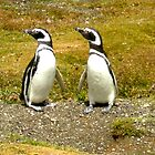 Penguin Friends by Ellen Rosen Singer