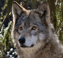Canis Lupus Rotterdammus by foppe47