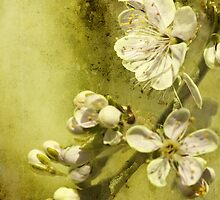 U is for ......Under the plum tree by Lissywitch