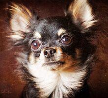 Chihuahua dog by Julia Shepeleva