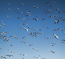 A sky filled with bird's by happyphotos