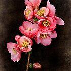 Cognassier du Japon by Leslie Nicole