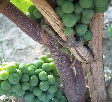 Pre-wine by rosaliemcm