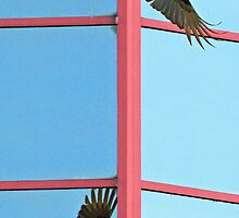 Turkey vulture with shadow reflected in glass building by jozi1