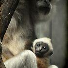 Baby Gibbon by Virag Anna Margittai