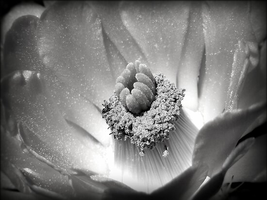 Desert Beauty ~ Black & White by Lucinda Walter