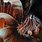Lionfish Macro by Leon Heyns