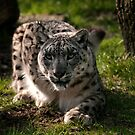 Snow Leopard by ©FoxfireGallery / FloorOne Photography