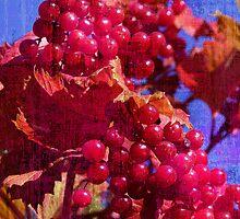 Berry Season by garthglaz